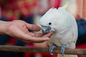 vit papegoja foto