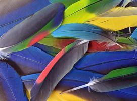 färgglada fjädrar foto