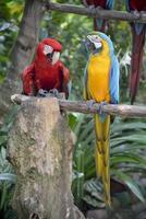 papegojor foto
