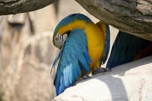 papegojan skugga foto