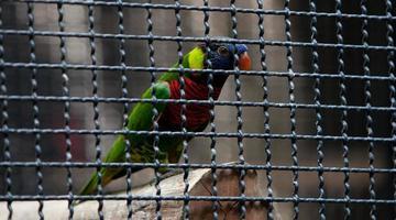 fågel i en bur foto
