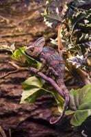 reptiler foto