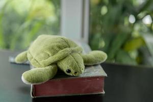 mage av sköldpaddocka foto