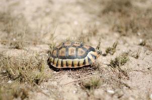 liten sköldpadda på torrt land foto