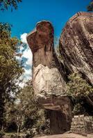 sten som ser ut som en kobra i sigiriya park foto