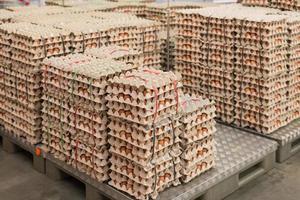 ägg från kycklingfarm i paketet foto