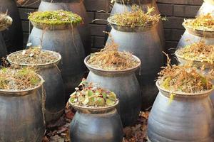 Koreansk keramisk keramik gammal traditionell foto