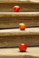 trädröda äpplen foto