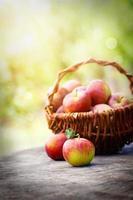 ekologiska äpplen foto