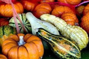 hösten pumpor och squash foto