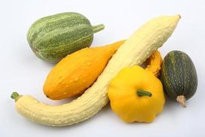squash och zucchini foto