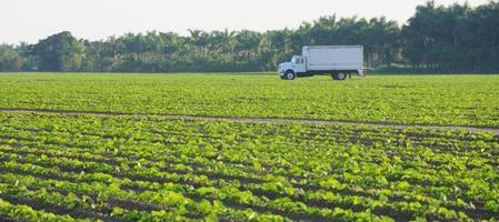 lastbil i fält, Florida foto