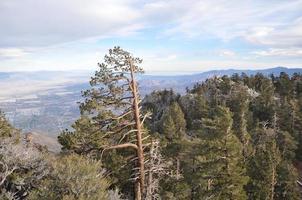 utsikt från palmfjädrar antennspårväg i Kalifornien foto