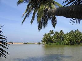 kerala bakvatten och kokosnötträd