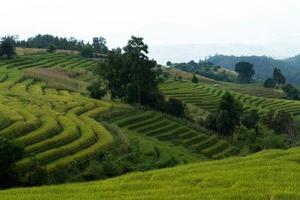 baan pa bong piang ris terrasserade fält närbild chiangmai foto