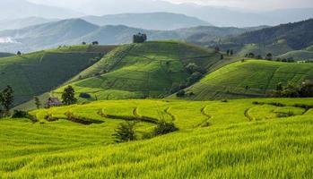 stängt upp baan pa bong piang ris terrasserat fält foto