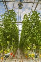 växthus teknik foto