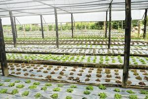 organisk och färsk grönsaksträdgård foto