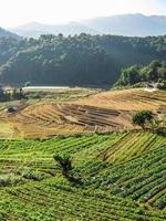 jordbruk i doi inthanon nationalpark foto