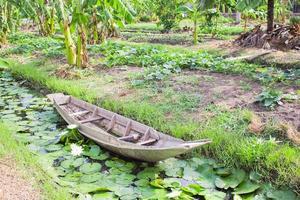 jordbruk foto