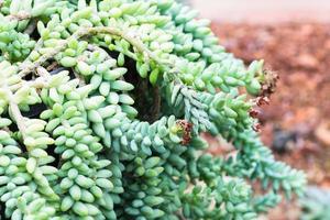 kaktus på stenbakgrund foto