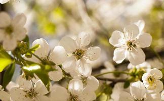 äppelträd foto