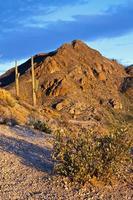 ökenlandskap i saguaro nationalpark foto