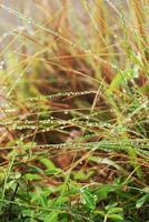 fuktigt gräs