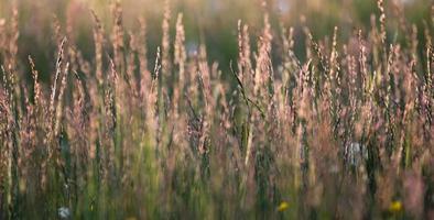 långt gräs