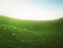 gräsfält foto