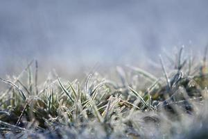 fryst gräs foto