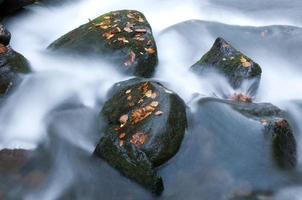 faller floden foto