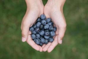 blåbär i händerna