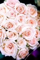 älskar rosor foto