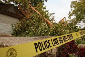 träd över kraftledningar foto