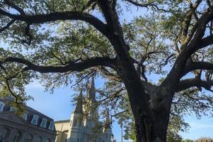 nya orleans jackson square levande ek och st. Louis domkyrka foto