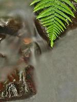 flodbank under träd vid bergfloden. foto