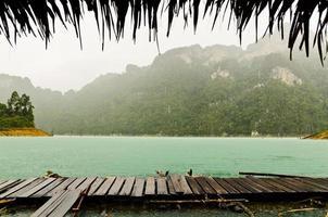 naturen i regnet .. foto