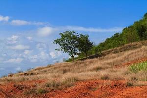 vårfält foto
