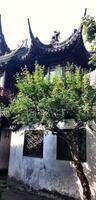te gårdsgata ingång, grönt te, dörröppning, traditionella, bönder, by. foto