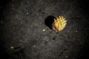 ananas med konstnärlig look foto