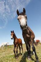 häst mycket intresserad foto