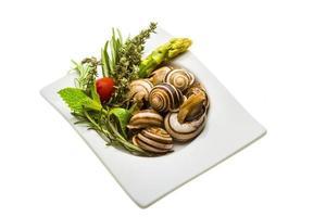 escargot med sparris, rosmarin, tymus och tomat foto