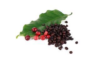 kaffebönor på en gren av trädet foto