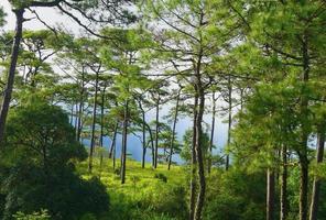 landskap av skogen