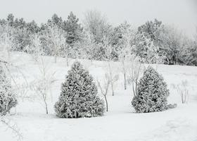 landskap snöig skog foto