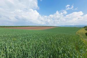 jordbrukslandskap foto