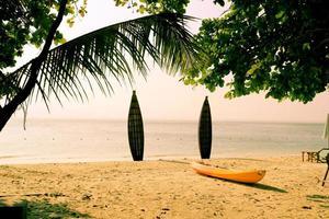 surfbrädor foto