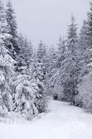 snötäckt vinterlandskap foto