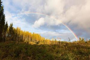 regnbåge och skoglandskap